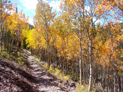 The aspen are gorgeous!