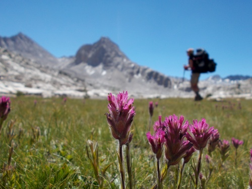Flowers of the JMT!