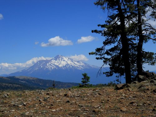 Mount Shasta dominates this region!