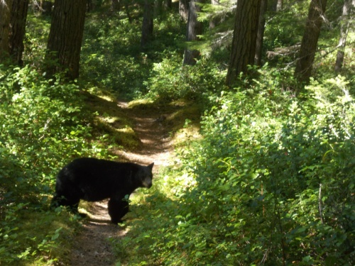 Bear on the trail!